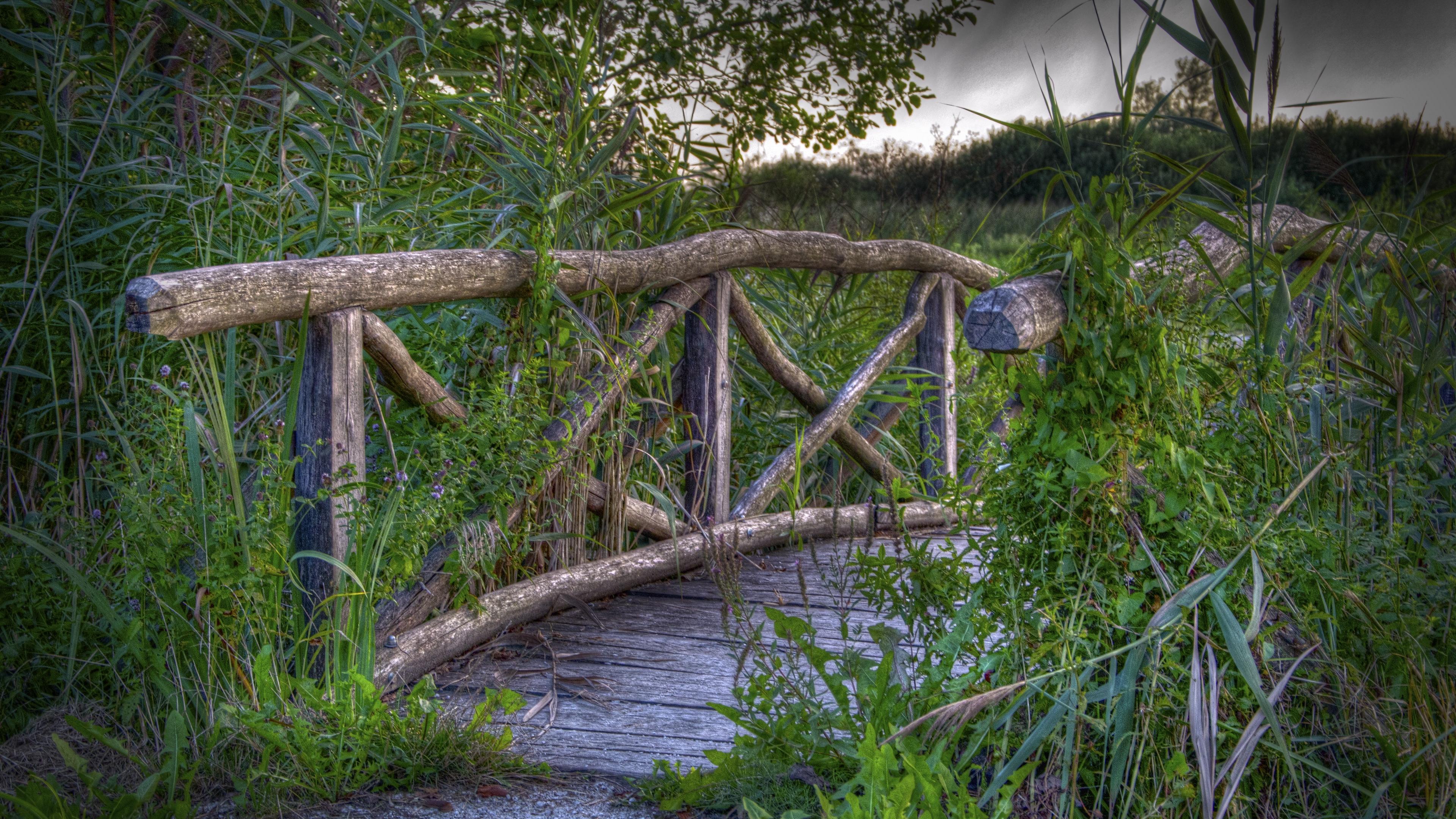 bridge plants grass landscape 4k 1541116105 - bridge, plants, grass, landscape 4k - plants, Grass, bridge