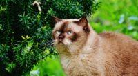 british shorthair cat cat branches 4k 1542242197 200x110 - british shorthair cat, cat, branches 4k - Cat, british shorthair cat, branches