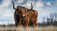 bull 4k 1542238377 200x110 - Bull 4k - hd-wallpapers, bull wallpapers, animals wallpapers, 4k-wallpapers