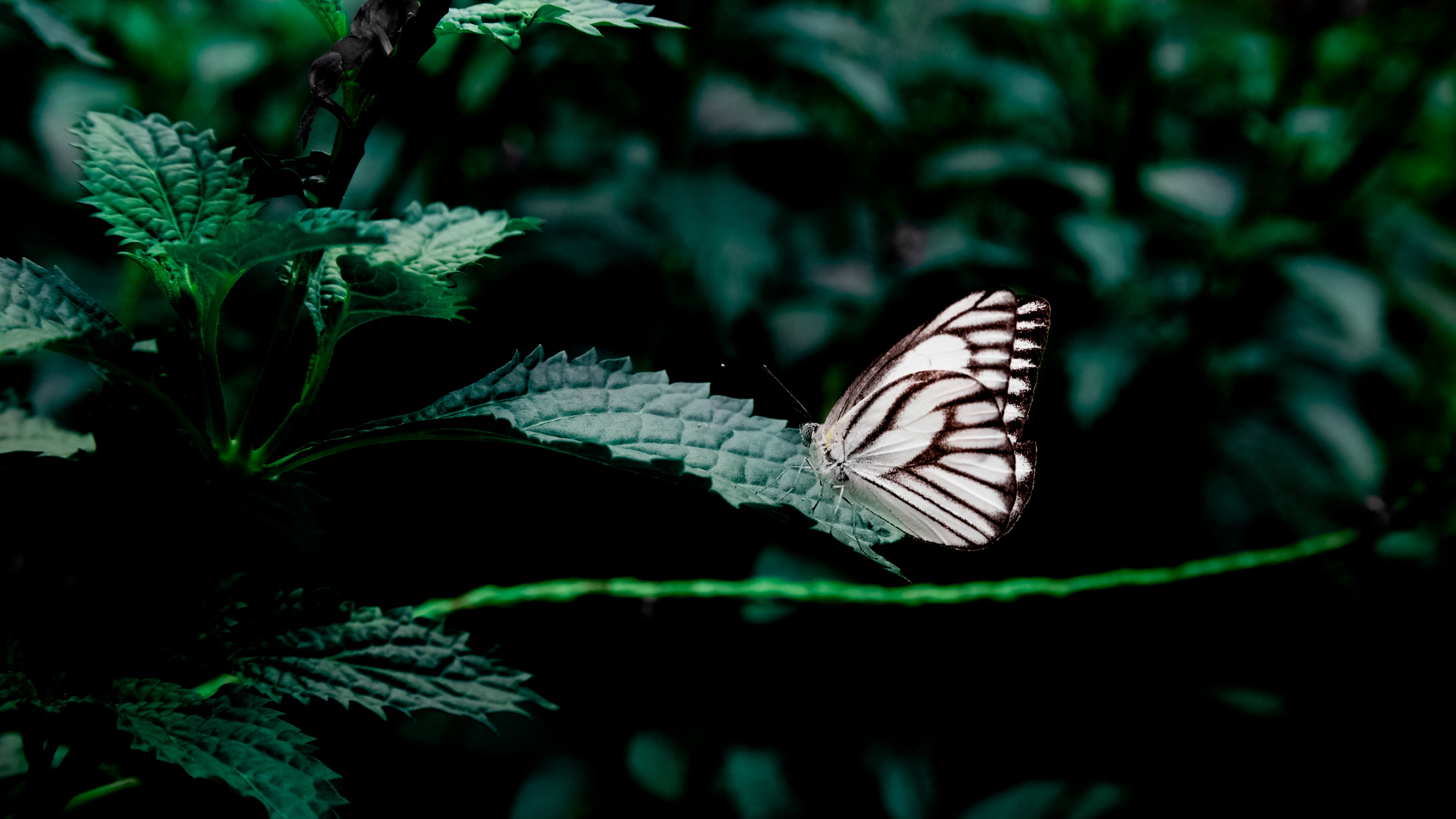 butterfly leaves insect 4k 1542242038 - butterfly, leaves, insect 4k - Leaves, insect, Butterfly