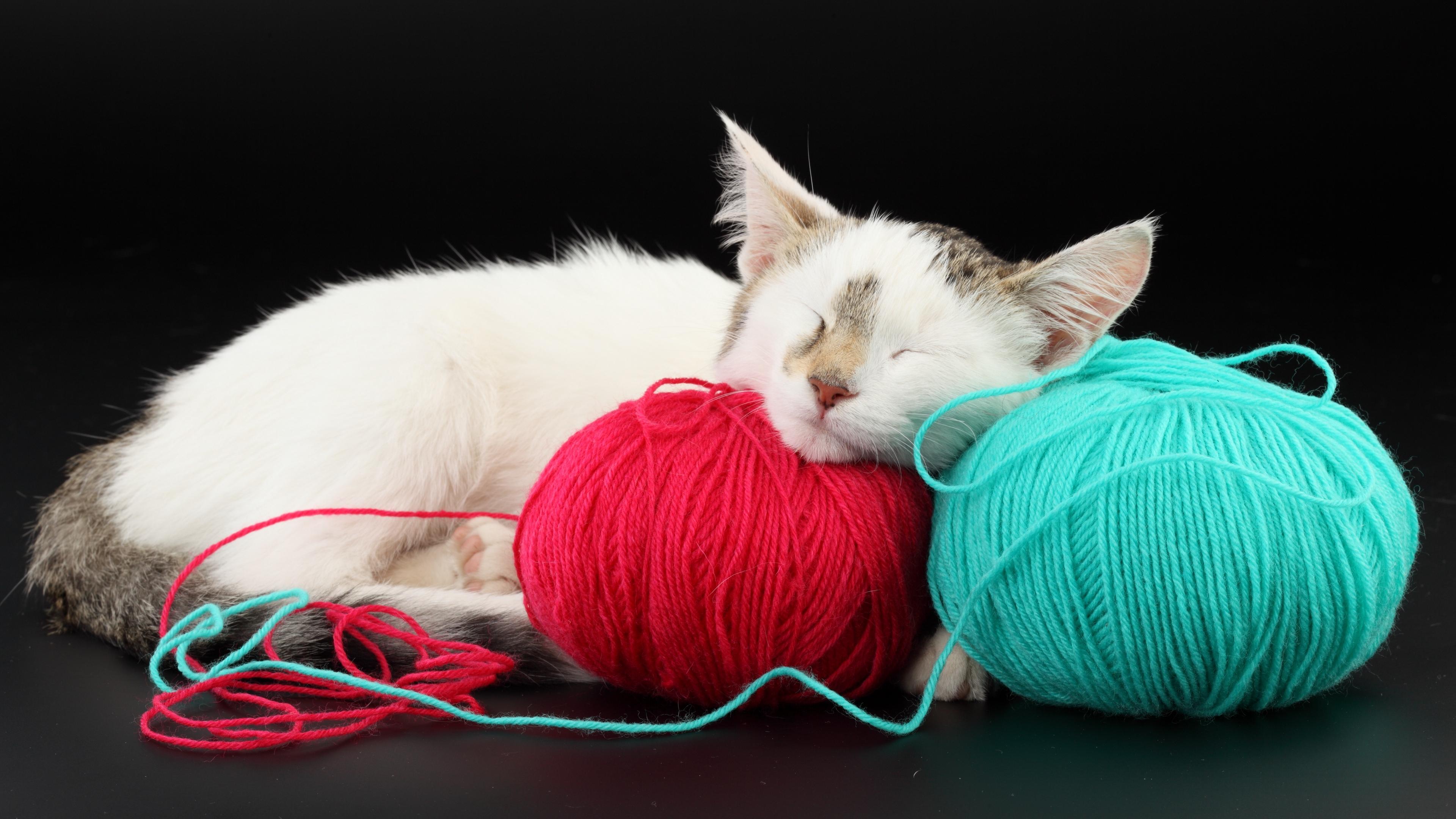 cat ball thread sleep playful 4k 1542241590 - cat, ball, thread, sleep, playful 4k - thread, Cat, Ball