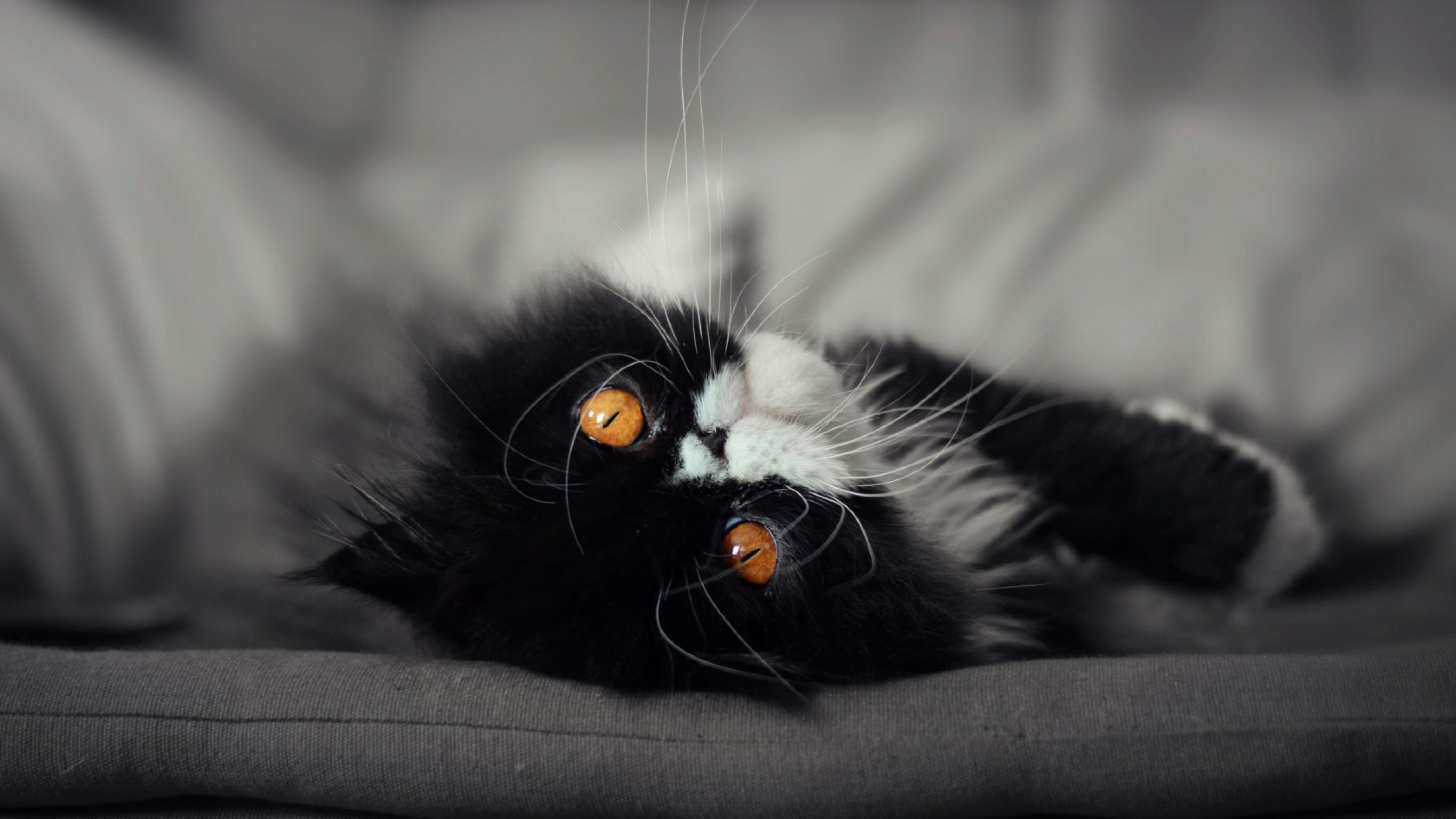 Wallpaper 4k Cat Eyes 4k Animals Wallpapers Black