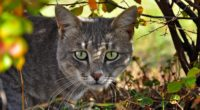 cat face grass climb 4k 1542241739 200x110 - cat, face, grass, climb 4k - Grass, Face, Cat