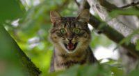 cat face scream tree 4k 1542242735 200x110 - cat, face, scream, tree 4k - scream, Face, Cat