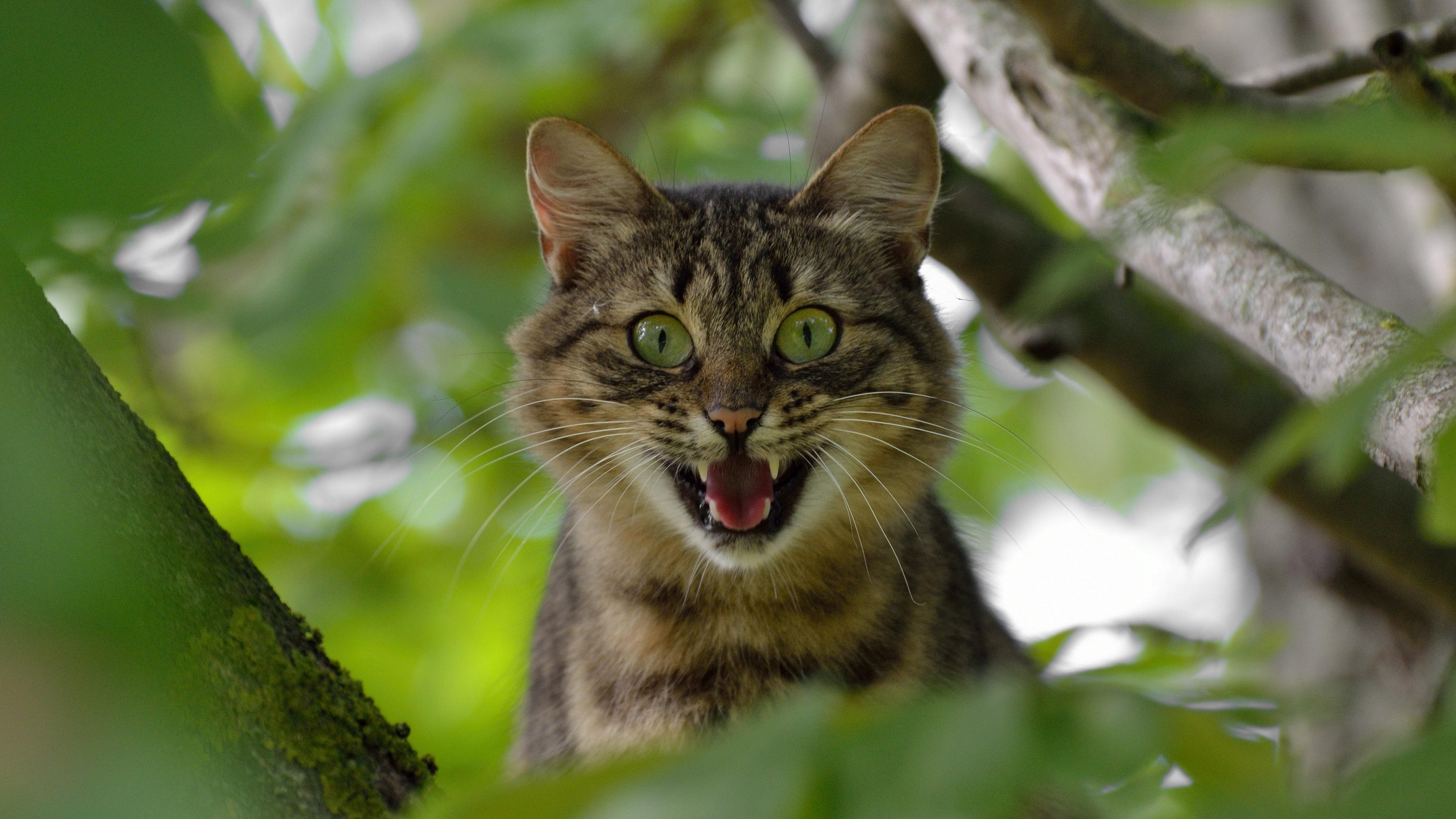 cat face scream tree 4k 1542242735 - cat, face, scream, tree 4k - scream, Face, Cat
