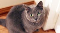cat face 1542238756 200x110 - Cat Face - hd-wallpapers, cat wallpapers, animals wallpapers, 4k-wallpapers