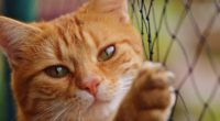 cat fence 1542238604 200x110 - Cat Fence - hd-wallpapers, fence wallpapers, cat wallpapers, animals wallpapers, 4k-wallpapers