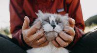 cat fluffy hands tenderness 4k 1542241499 200x110 - cat, fluffy, hands, tenderness 4k - Hands, fluffy, Cat