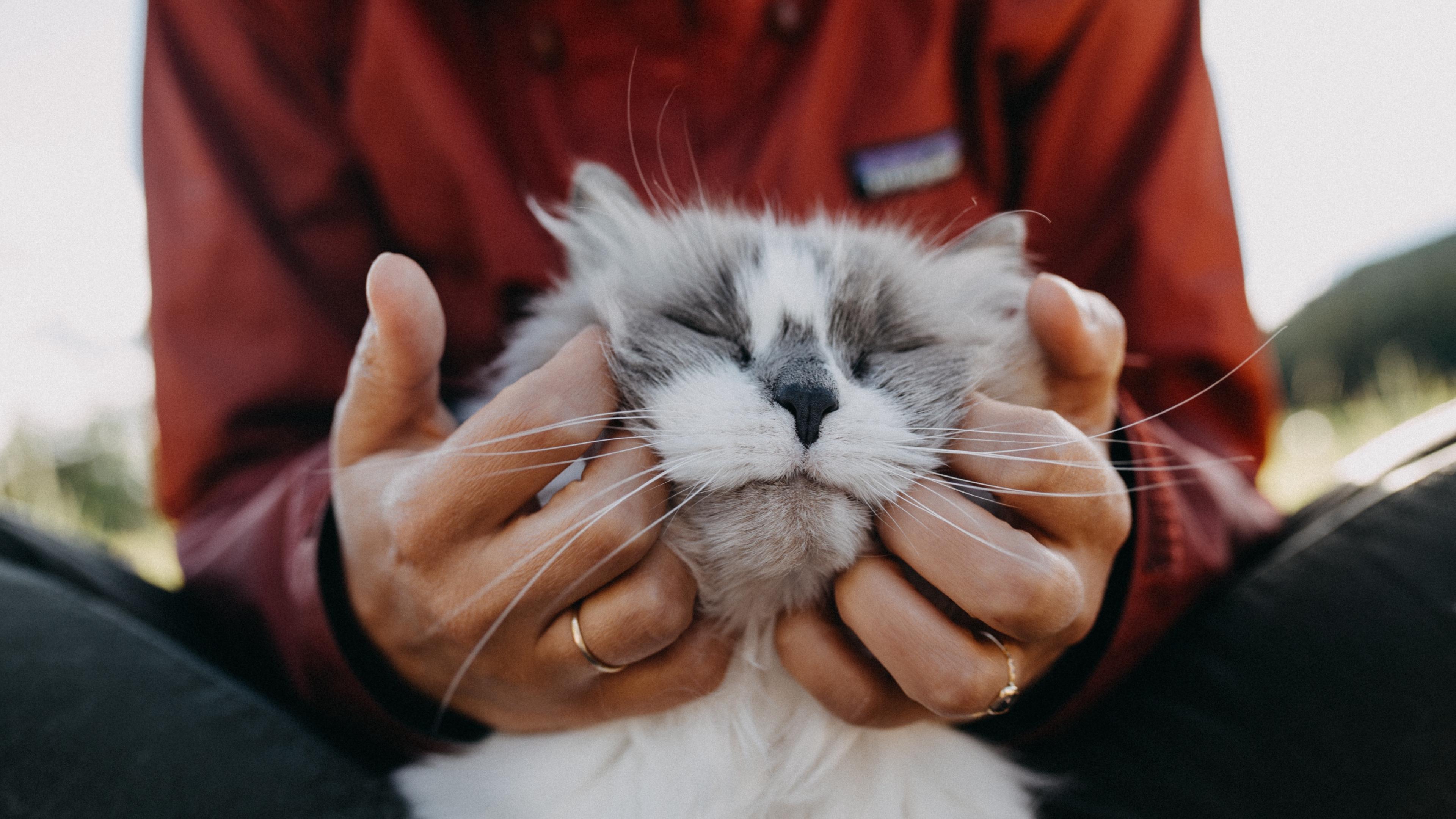 cat fluffy hands tenderness 4k 1542241499 - cat, fluffy, hands, tenderness 4k - Hands, fluffy, Cat