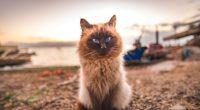 cat fluffy sitting muzzle 4k 1542242076 200x110 - cat, fluffy, sitting, muzzle 4k - Sitting, fluffy, Cat