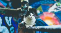 cat furry sitting blur 4k 1542242793 200x110 - cat, furry, sitting, blur 4k - Sitting, furry, Cat