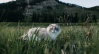 cat furry walk grass 4k 1542241403 200x110 - cat, furry, walk, grass 4k - walk, furry, Cat