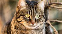 cat muzzle eyes 4k 1542242284 200x110 - cat, muzzle, eyes 4k - muzzle, Eyes, Cat