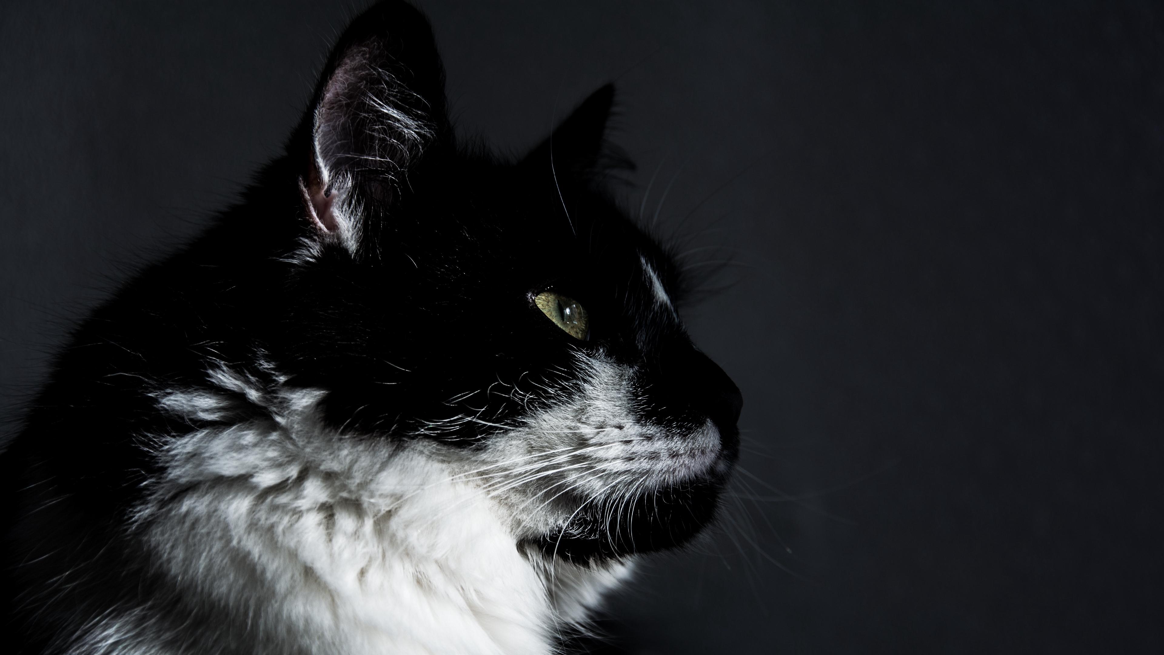 cat muzzle profile 4k 1542242082 - cat, muzzle, profile 4k - Profile, muzzle, Cat