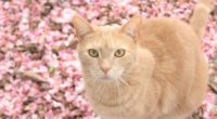 cat on pink flowers 4k 1542238036 200x110 - Cat On Pink Flowers 4k - pink wallpapers, flowers wallpapers, cat wallpapers, animals wallpapers