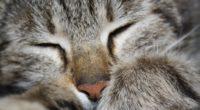 cat paw striped face 4k 1542241690 200x110 - cat, paw, striped, face 4k - striped, paw, Cat