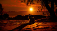 cat watching sunset 4k 1542239644 200x110 - Cat Watching Sunset 4k - sunset wallpapers, hd-wallpapers, deviantart wallpapers, cat wallpapers, animals wallpapers, 4k-wallpapers