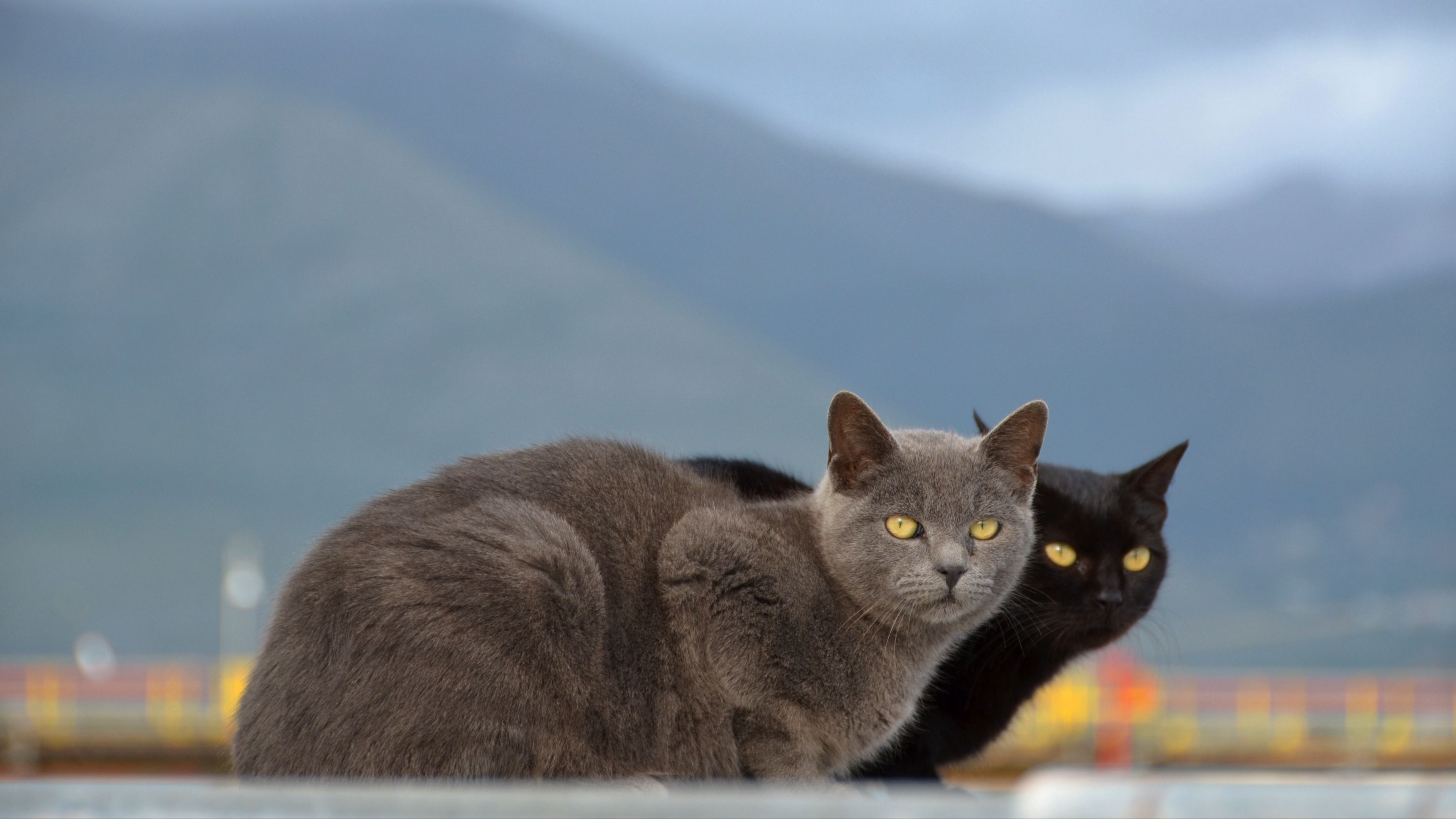 cats couple mountains blurring 4k 1542242885 - cats, couple, mountains, blurring 4k - Mountains, Couple, cats