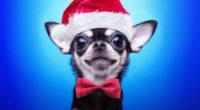 christmas puppy 1542238584 200x110 - Christmas Puppy - hd-wallpapers, dog wallpapers, animals wallpapers, 4k-wallpapers