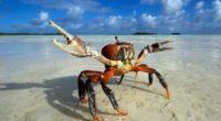 crab 4k 1542238184 200x110 - Crab 4k - crab wallpapers, animals wallpapers