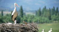 cranes chick nest 4k 1542241598 200x110 - cranes, chick, nest 4k - Nest, Cranes, chick