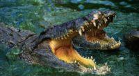 crocodile snout teeth water predator 4k 1542242683 200x110 - crocodile, snout, teeth, water, predator 4k - teeth, snout, crocodile