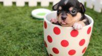 cute dog puppy in cup 1542237661 200x110 - Cute Dog Puppy In Cup - puppy wallpapers, dog wallpapers, cute wallpapers, cup wallpapers, animals wallpapers