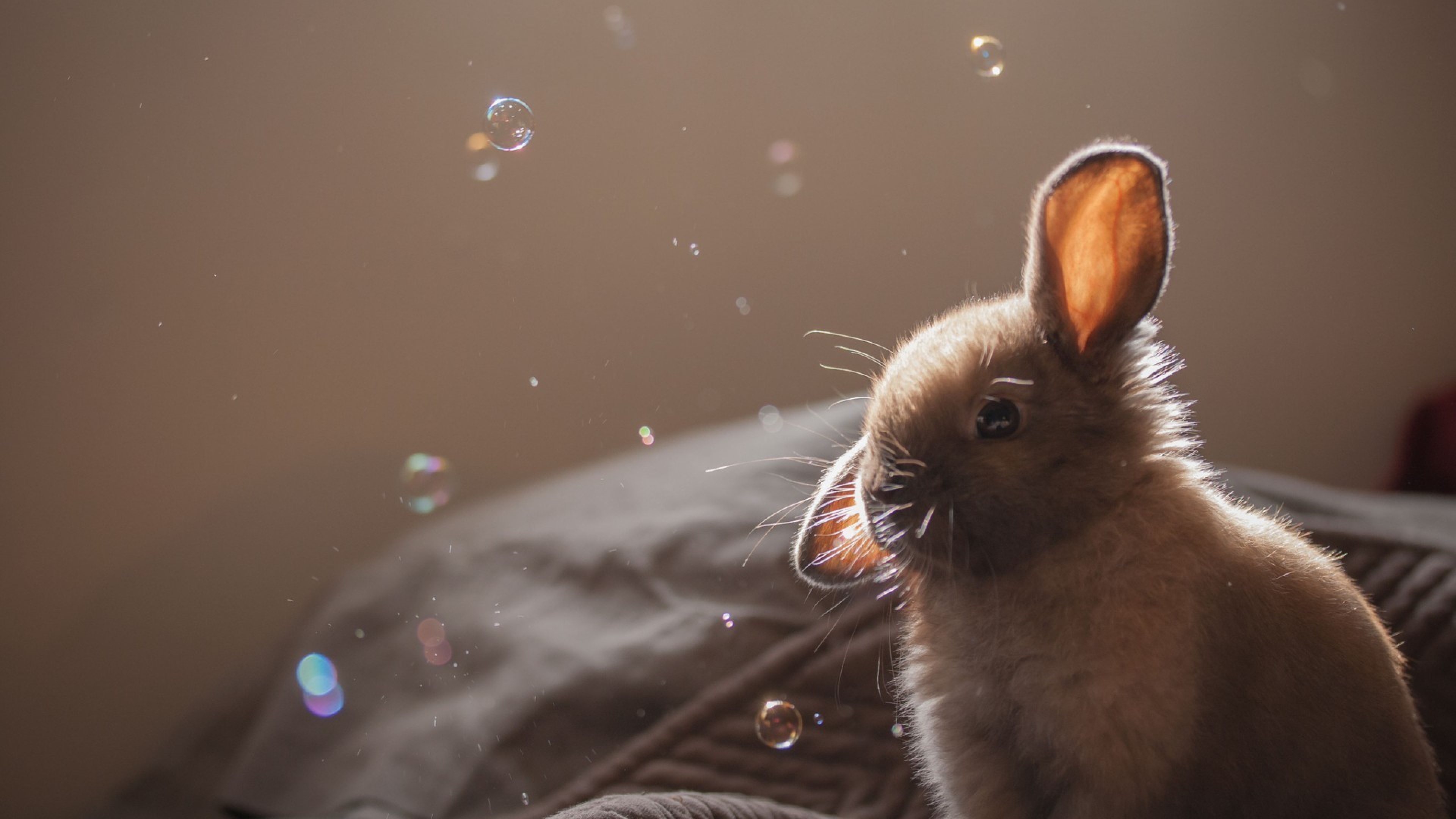 cute rabbit 2 4k 1542237747 - Cute Rabbit 2 4k - rabbit wallpapers 4k, cute wallpapers, animals wallpapers