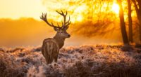 deer in forest 4k 1542237641 200x110 - Deer In Forest 4k - forest wallpapers, deer wallpapers, animals wallpapers