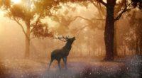 deer wild nature forest 4k 1542238578 200x110 - Deer Wild Nature Forest 4k - nature wallpapers, hd-wallpapers, forest wallpapers, deer wallpapers, 4k-wallpapers