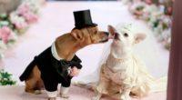 dog couple wedding dress 4k 1542242573 200x110 - dog, couple, wedding, dress 4k - Wedding, Dog, Couple