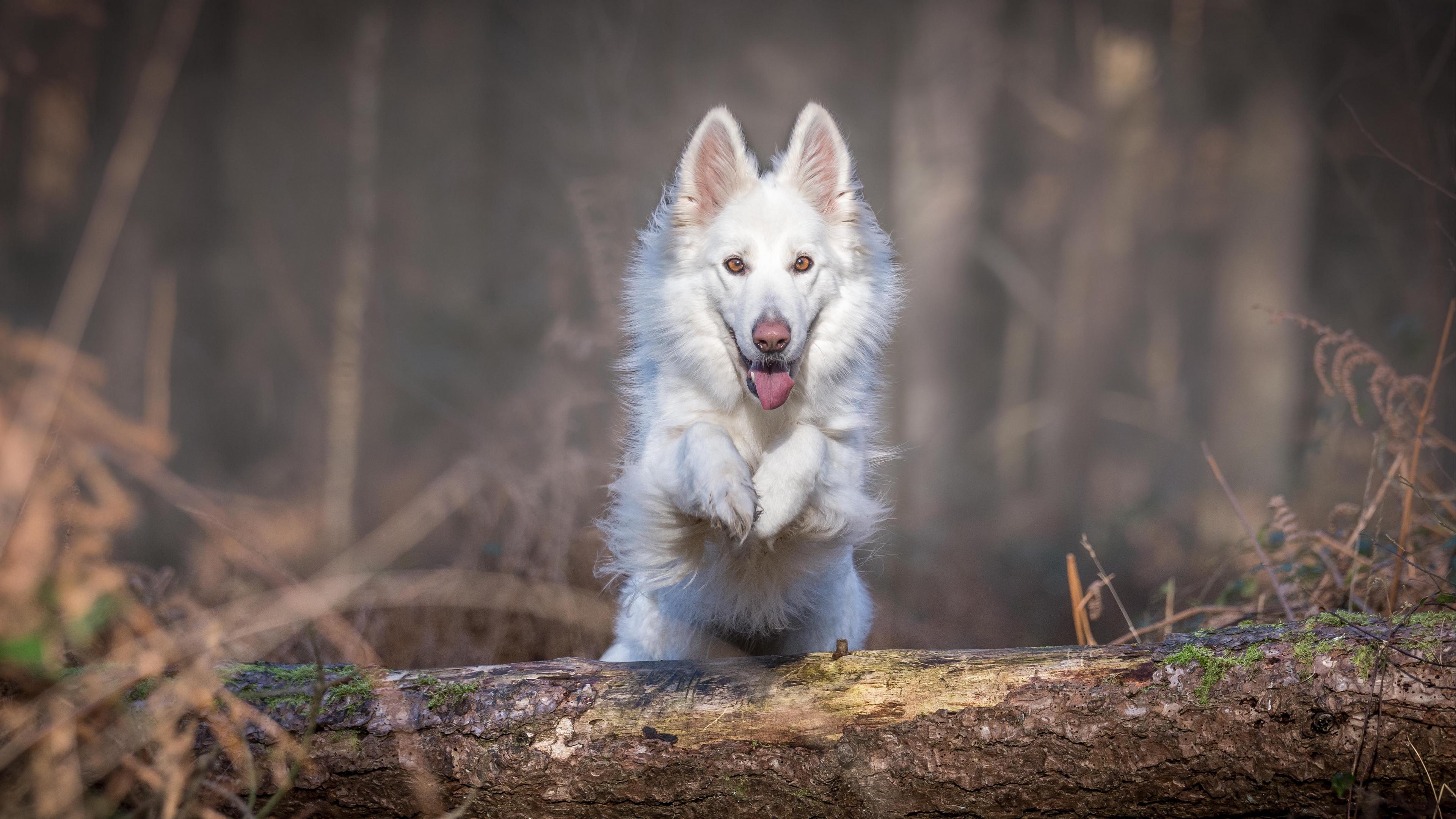 dog jump white log 4k 1542241684 - dog, jump, white, log 4k - white, jump, Dog