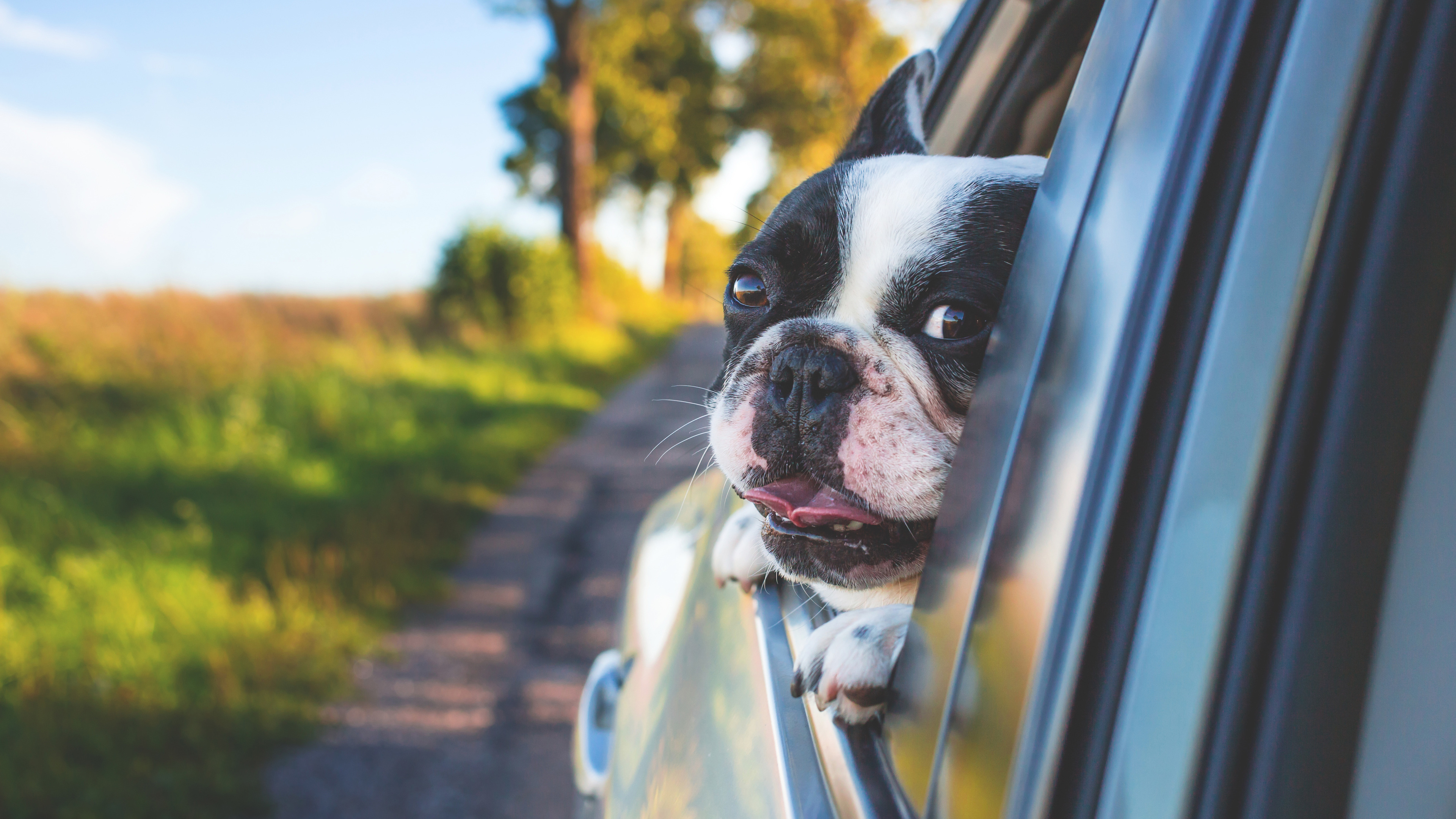 dog looking outside car window 1542238899 - Dog Looking Outside Car Window - photography wallpapers, hd-wallpapers, dog wallpapers, cute wallpapers, animals wallpapers, 4k-wallpapers