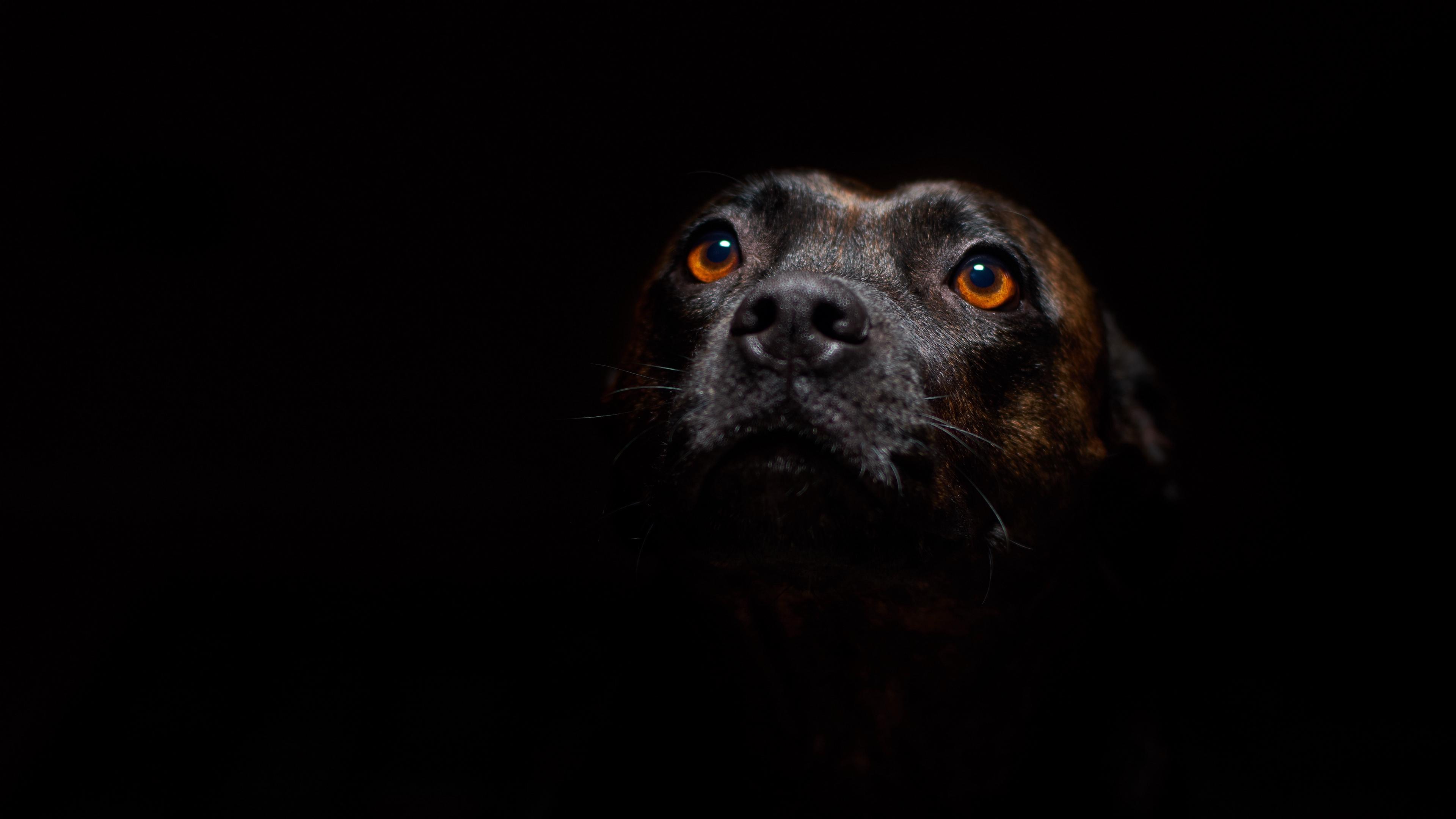 dog muzzle sight dark 4k 1542241545 - dog, muzzle, sight, dark 4k - Sight, muzzle, Dog