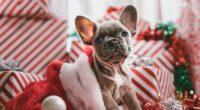 dog puppy new year 4k 1542242789 200x110 - dog, puppy, new year 4k - Puppy, new year, Dog