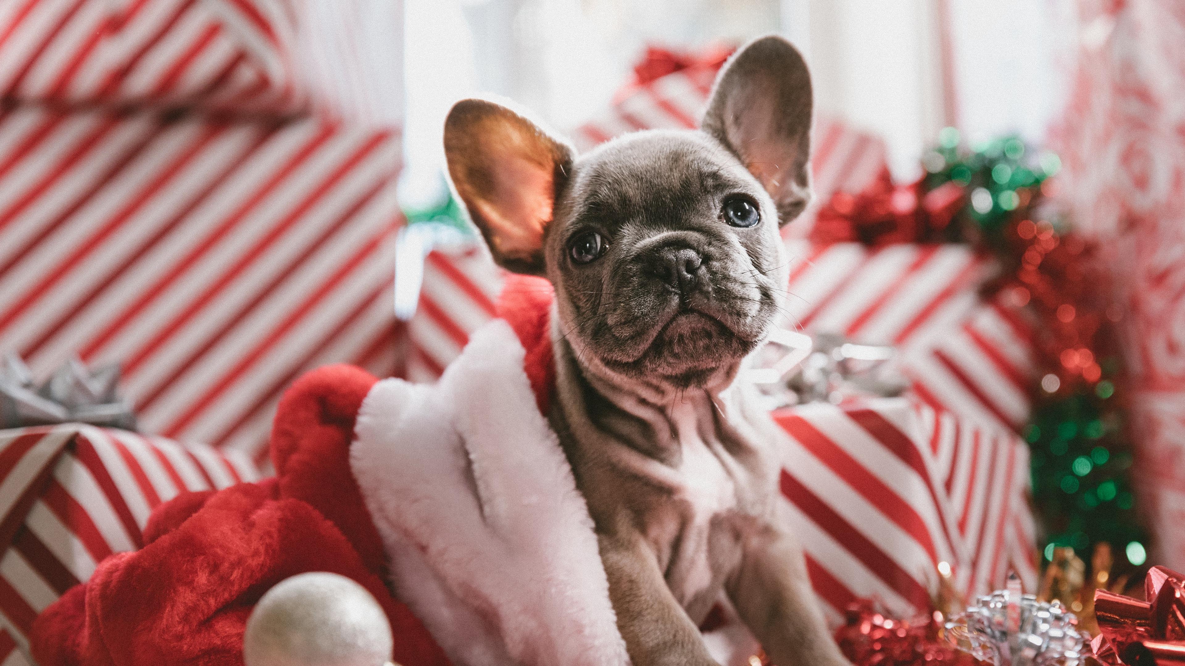 dog puppy new year 4k 1542242789 - dog, puppy, new year 4k - Puppy, new year, Dog