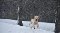 dog running in a snow 1542238571 200x110 - Dog Running In A Snow - hd-wallpapers, dogs wallpapers, animals wallpapers, 4k-wallpapers