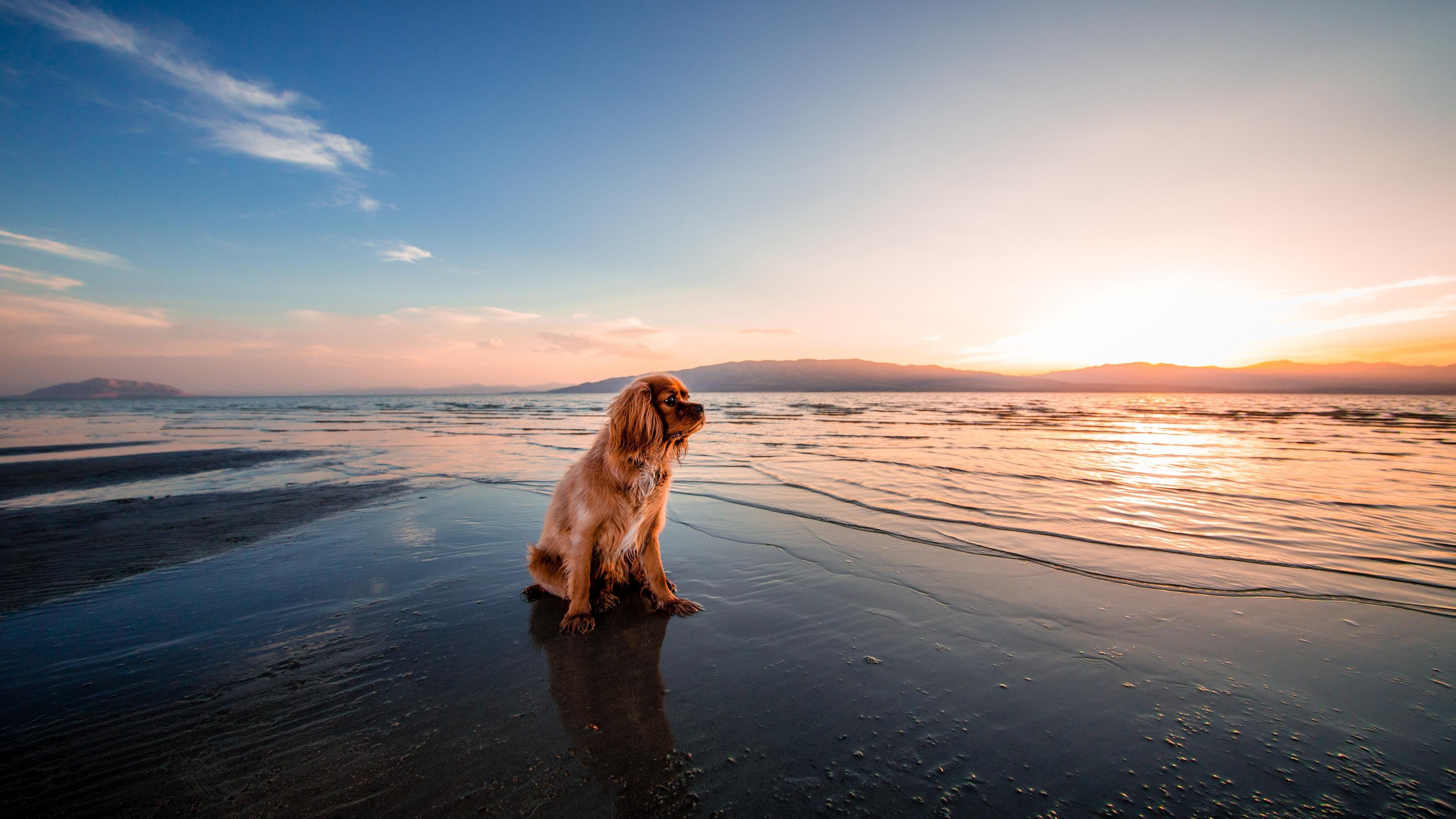 dog sea sitting shore 4k 1542242437 - dog, sea, sitting, shore 4k - Sitting, Sea, Dog