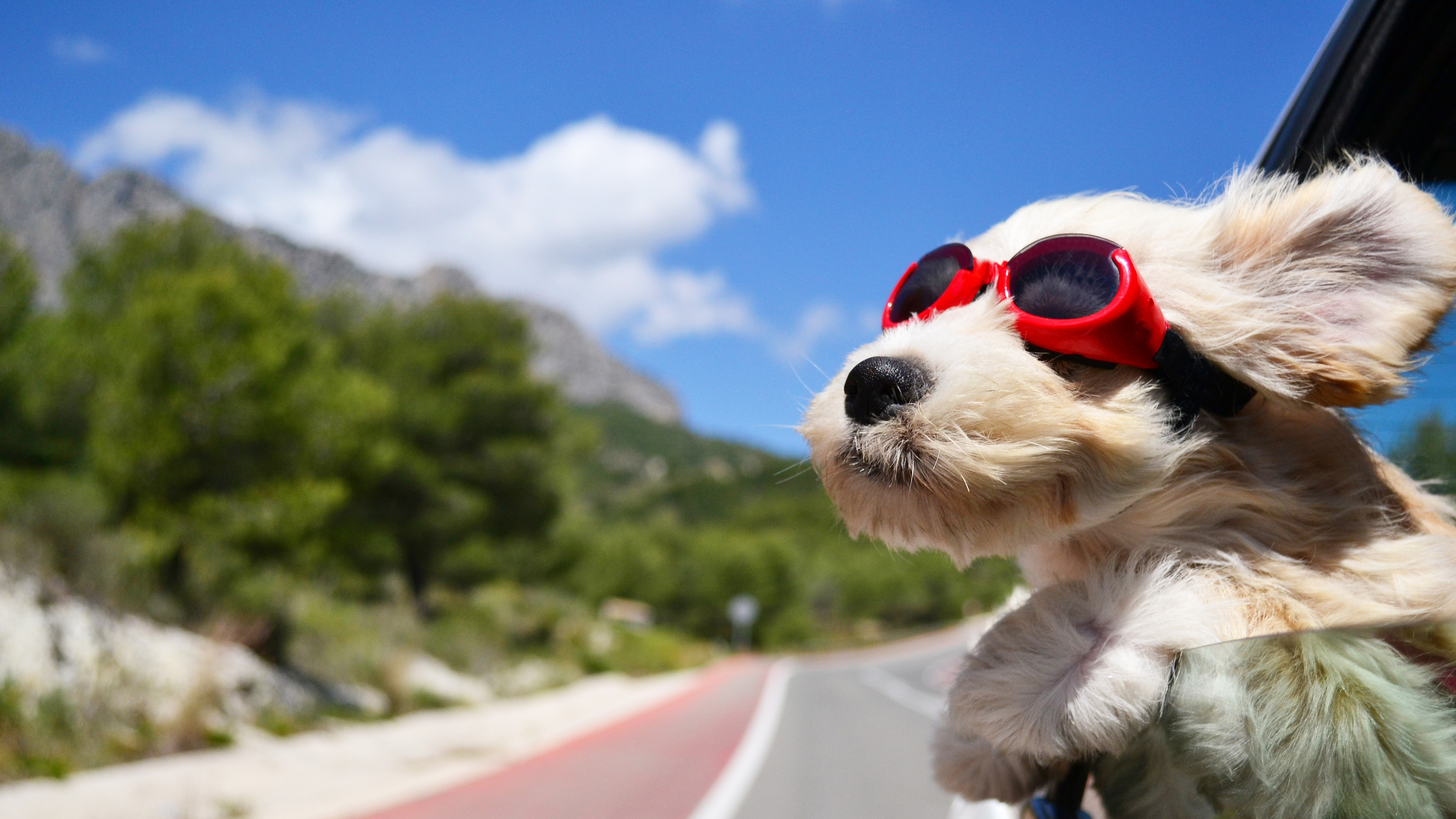 dog with glasses 4k 1542237729 - Dog With Glasses 4k - glasses wallpapers, funny wallpapers, dog wallpapers, animals wallpapers