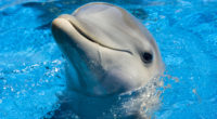 dolphin cute 1542237659 200x110 - Dolphin Cute - dophin wallpapers, cute wallpapers, animals wallpapers