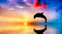 dolphin jumping out of water sunset view 4k 1542238884 200x110 - Dolphin Jumping Out Of Water Sunset View 4k - sunset wallpapers, ocean wallpapers, jump wallpapers, hd-wallpapers, fish wallpapers, dolphin wallpapers, 4k-wallpapers