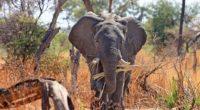 elephant safari africa trunk 4k 1542242851 200x110 - elephant, safari, africa, trunk 4k - safari, elephant, Africa