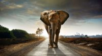 elephant walking on the road hdr 4k 1542238569 200x110 - Elephant Walking On The Road Hdr 4k - walking wallpapers, road wallpapers, hd-wallpapers, elephant wallpapers, animals wallpapers, 4k-wallpapers