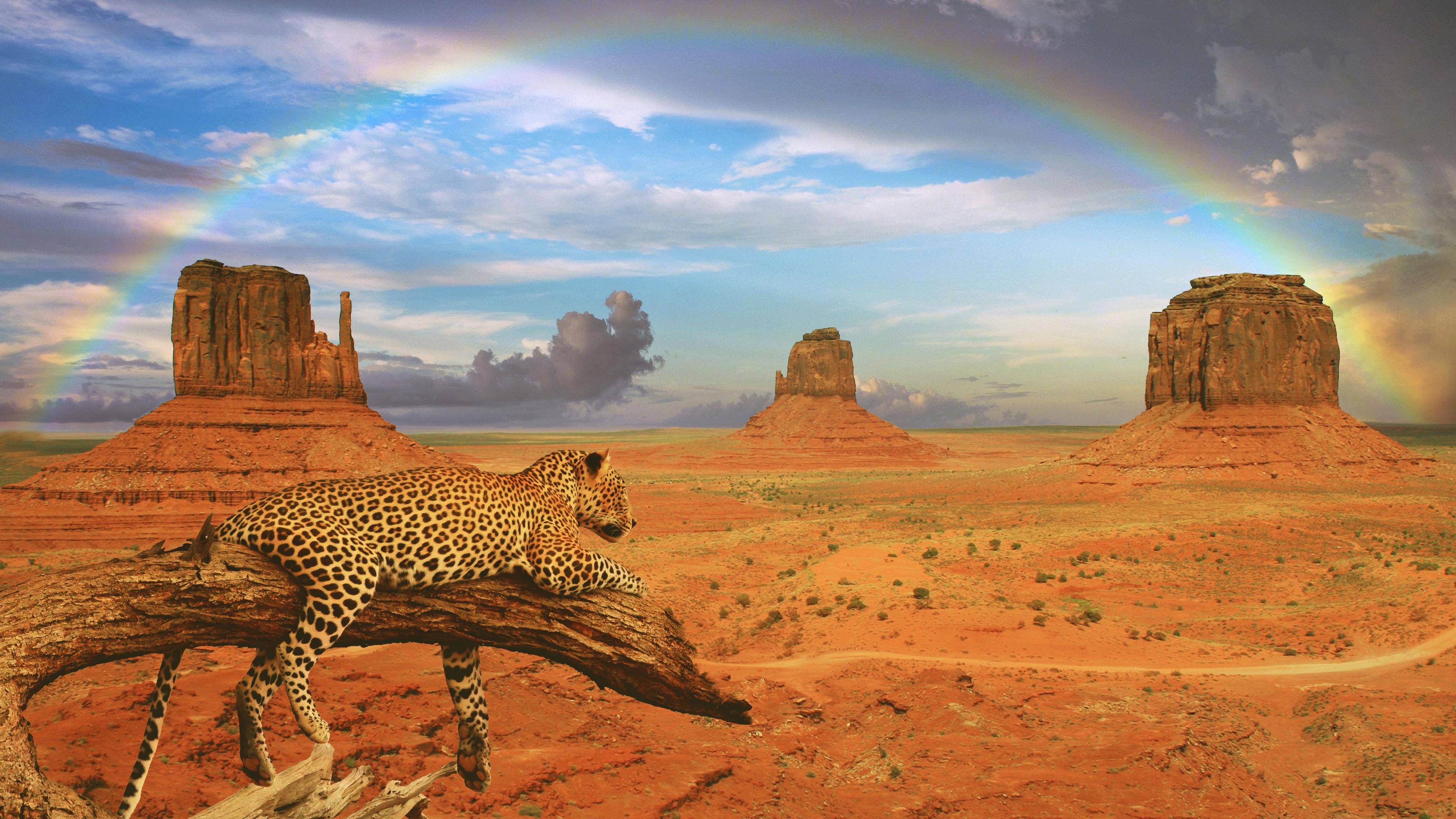 fantasy leopard rainbow 1542238773 - Fantasy Leopard Rainbow - rainbow wallpapers, leopard wallpapers, hd-wallpapers, fantasy wallpapers, animals wallpapers, 4k-wallpapers