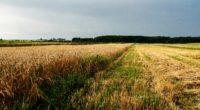 field agriculture ukraine 4k 1541114374 200x110 - field, agriculture, ukraine 4k - Ukraine, Field, Agriculture
