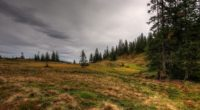 field forest nature 4k 1541114367 200x110 - field, forest, nature 4k - Nature, Forest, Field