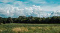 field grass clouds trees 4k 1541116011 200x110 - field, grass, clouds, trees 4k - Grass, Field, Clouds