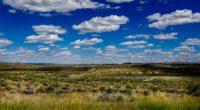field grass horizon clouds summer 4k 1541115177 200x110 - field, grass, horizon, clouds, summer 4k - Horizon, Grass, Field