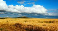 field wheat autumn cleaning kazakhstan petropavlovsk heaven cloud distance endless 4k 1541117547 200x110 - field, wheat, autumn, cleaning, kazakhstan, petropavlovsk, heaven, cloud, distance, endless 4k - wheat, Field, Autumn
