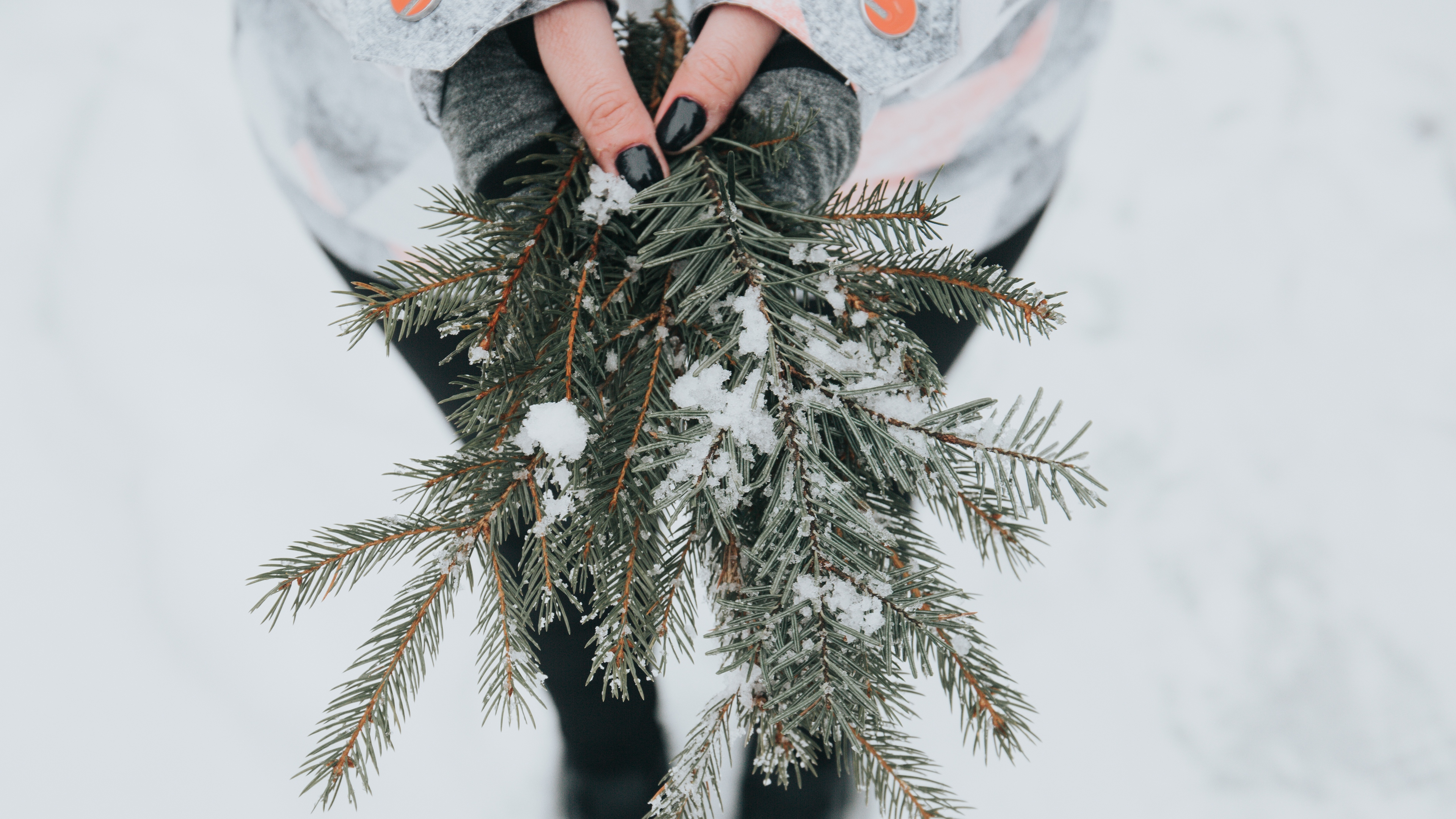 fir snow branches hands 4k 1541114745 - fir, snow, branches, hands 4k - Snow, fir, branches